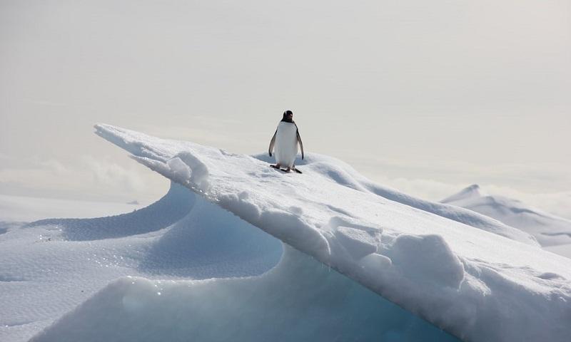 Número de pinguins na Antártica cai quase 60%