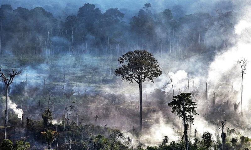 Derrubada de florestas em terras de povos indígenas isolados cresceu 113% em 2019