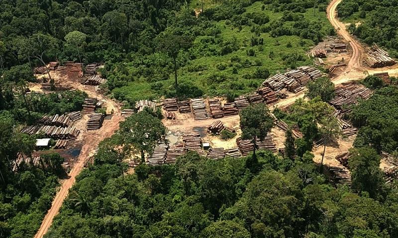 Madeireiros agradecem publicamente Ibama por reduzir documentação necessária para exportação de seus produtos