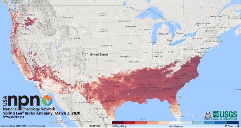 Primavera chega quatro semanas antes em algumas regiões dos Estados Unidos, o mais cedo em 100 anos