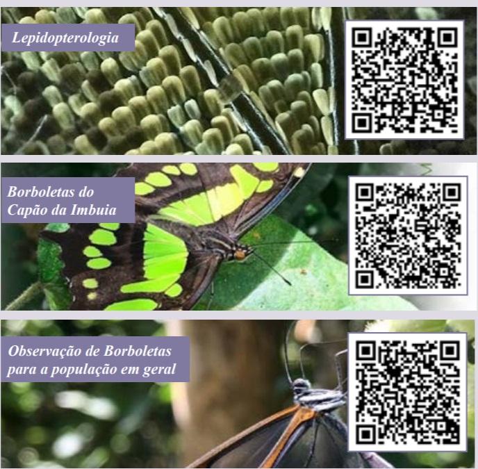 Enorme variedade de espécies de borboletas em Curitiba surpreende pesquisadores
