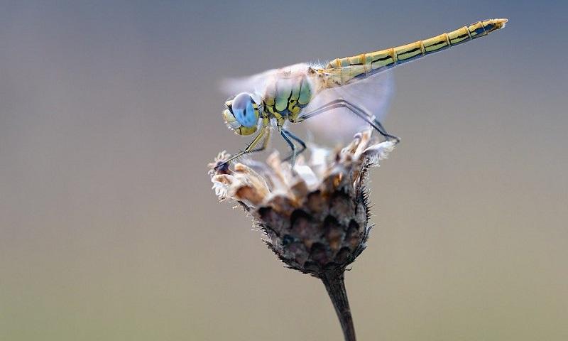 Quase 25% dos insetos do mundo desapareceram nos últimos 30 anos, revela novo estudo