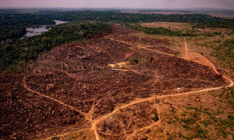 Apesar da pandemia, desmatamento desenfreado pode provocar alta nas emissões de carbono de 10% a 20% no Brasil em 2020