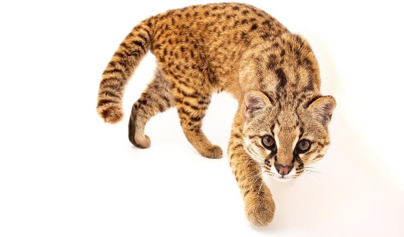 Fotógrafo Joel Sartore clica imagem 10 mil para arquivo digital de animais que podem ser extintos