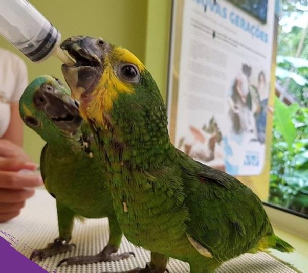 Fechado por causa da pandemia da Covid, Parque das Aves, em Foz do Iguaçu, é obrigado a demitir 130 funcionários