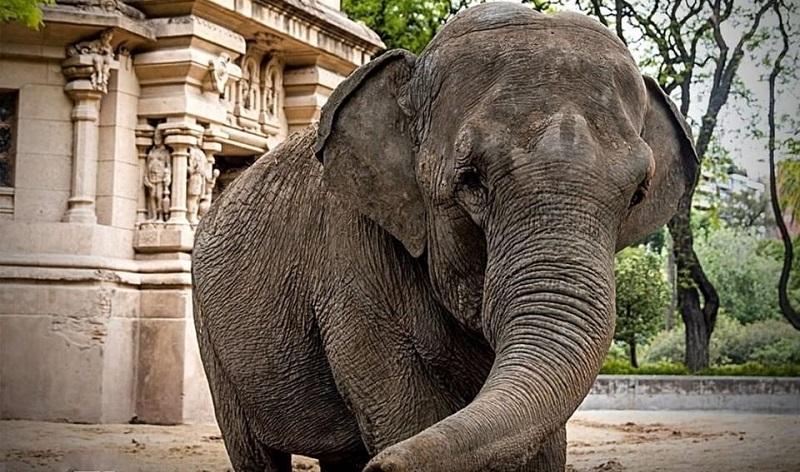 Fronteira entre Brasil e Argentina é aberta para a passagem da Mara, a nova moradora do Santuário dos Elefantes, na Chapada dos Guimarães