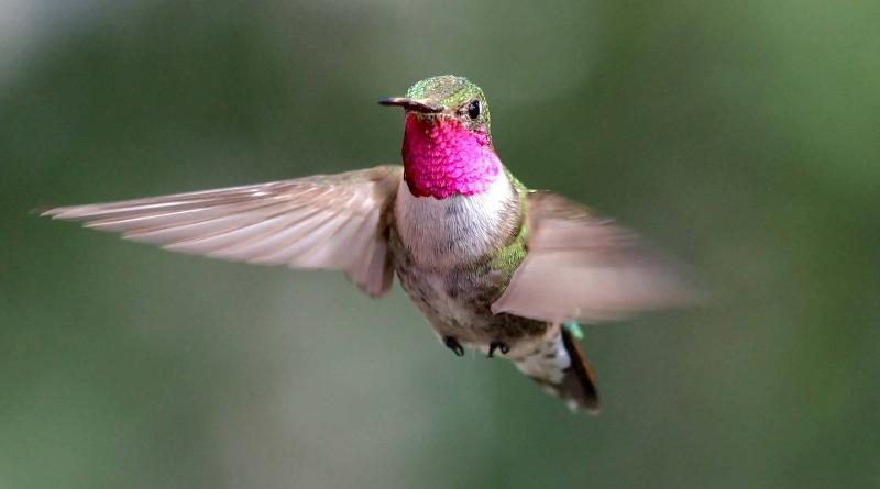 Beija-flores conseguem enxergar um espectro de cores muito maior do que os seres humanos