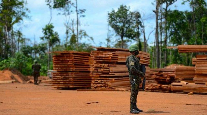 Forças Armadas voltarão a realizar operações contra o desmatamento na Amazônia
