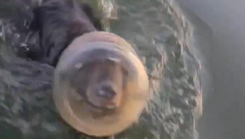 Família salva filhote de urso com embalagem de plástico presa na cabeça