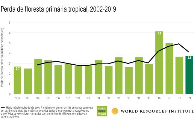 A cada 6 segundos o planeta perdeu um campo de futebol de floresta tropical em 2019: Brasil está no topo do ranking
