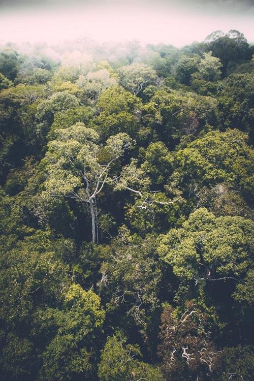 Imagens do fotógrafo mineiro Augusto Gomes ilustram exposição, na França, sobre a biodiversidade e a preservação da Amazônia