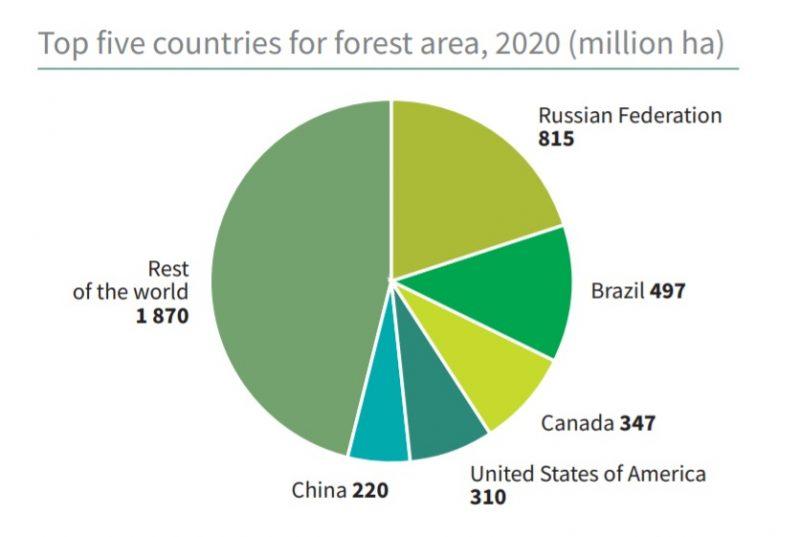 Brasil lidera ranking de países que mais tiveram perda florestal na última década