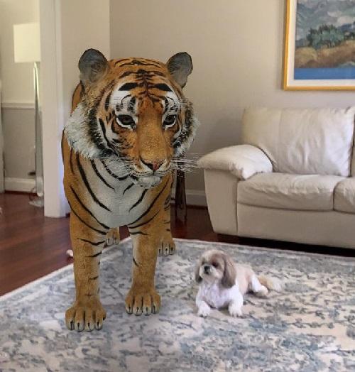 Ferramenta do Google leva animais para dentro de casa para a diversão de crianças... e adultos!