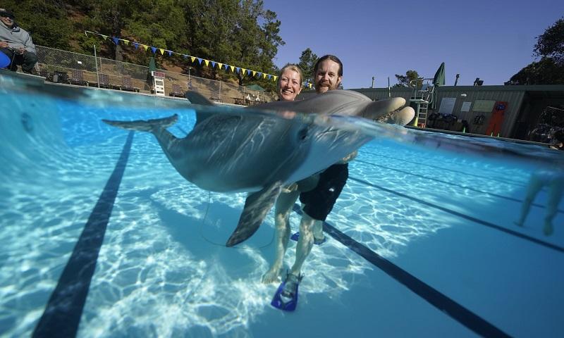 Golfinho robô, idêntico a um de verdade, é alternativa para atrações de parques e zoológicos