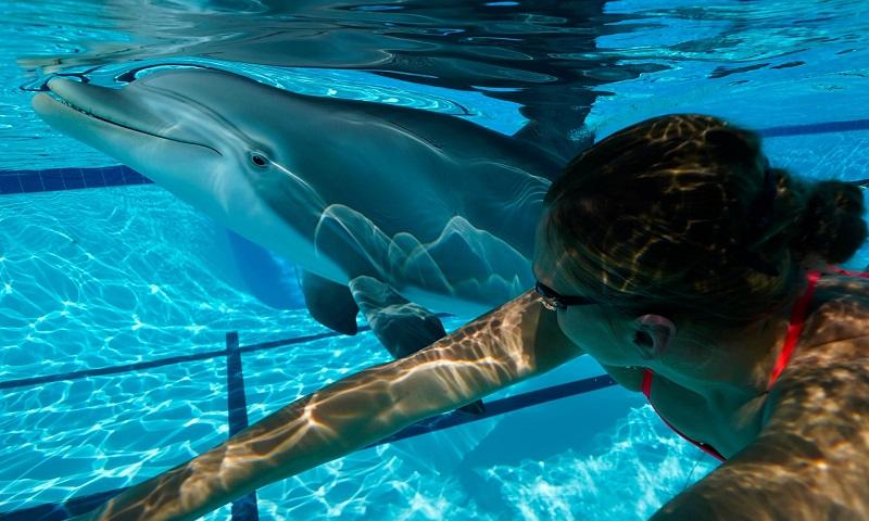 Golfinho robô, que imita perfeitamente um natural, é alternativa para atrações de parques e zoológicos