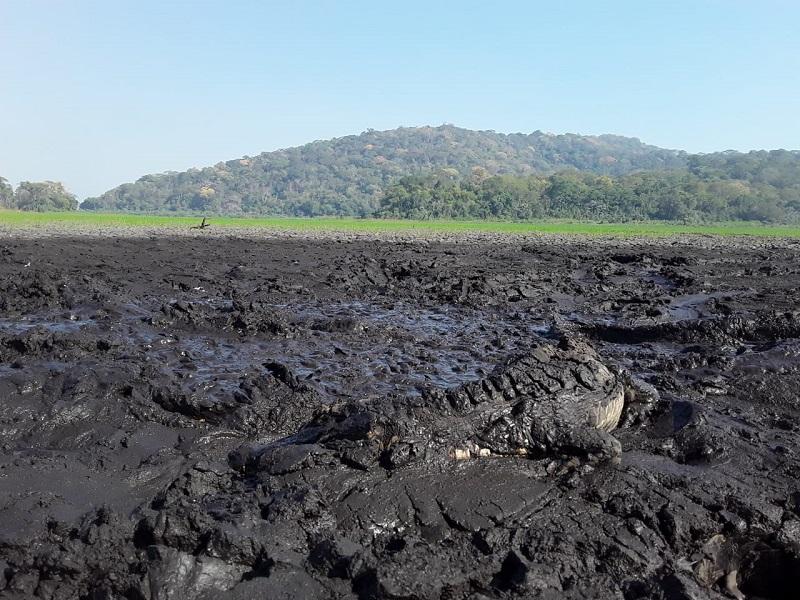 Pantanal sofre com incêndios: focos de calor no primeiro semestre já são os mais altos dos últimos 20 anos