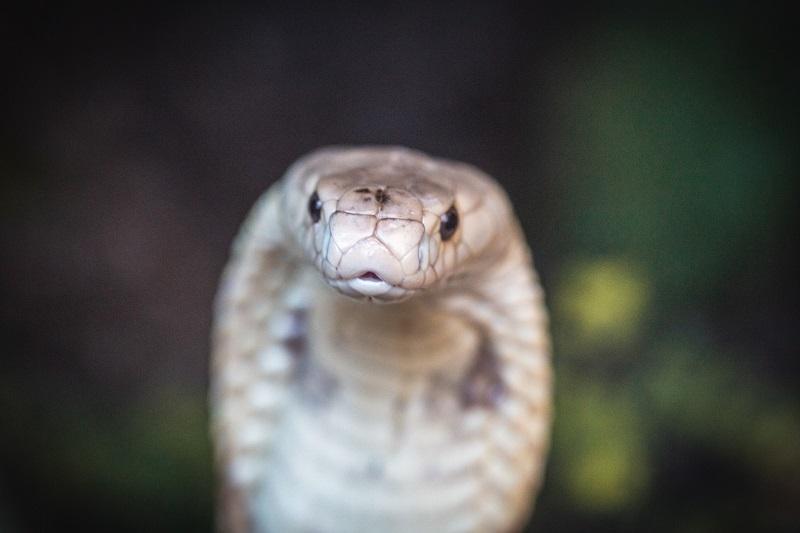 Estudante picado por naja é multado em R$ 60 mil pelo Ibama e responderá processo por criação ilegal de outras serpentes