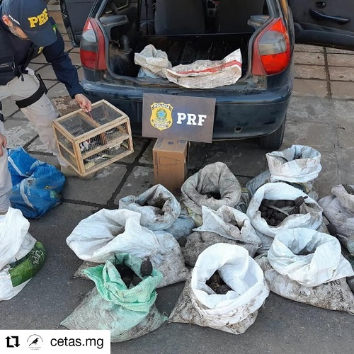 Polícia apreende mais de 1.400 filhotes de jabutis em Minas Gerais, vítimas do comércio ilegal de animais