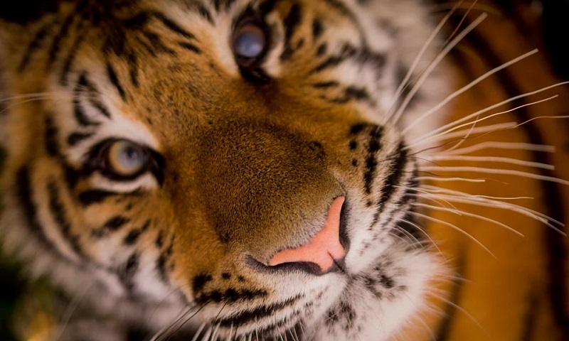 Tráfico de animais silvestres aumenta ameaça de novas pandemias e expansão para comércio digital impõe risco ainda maior à humanidade