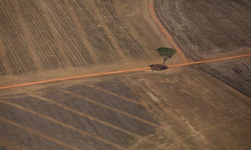Ministério do Meio Ambiente usou menos de 15% de verba para mudança climática e conservação da biodiversidade