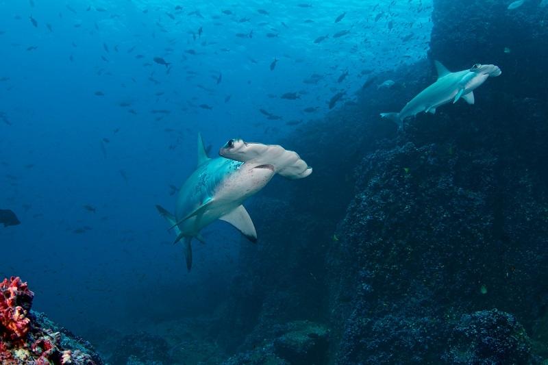Navios pesqueiros chineses ameaçam biodiversidade de Galápagos
