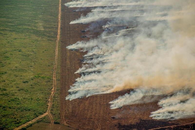 Julho tem aumento de quase 30% no número de queimadas na Amazônia e num único dia recorde dos últimos 15 anos