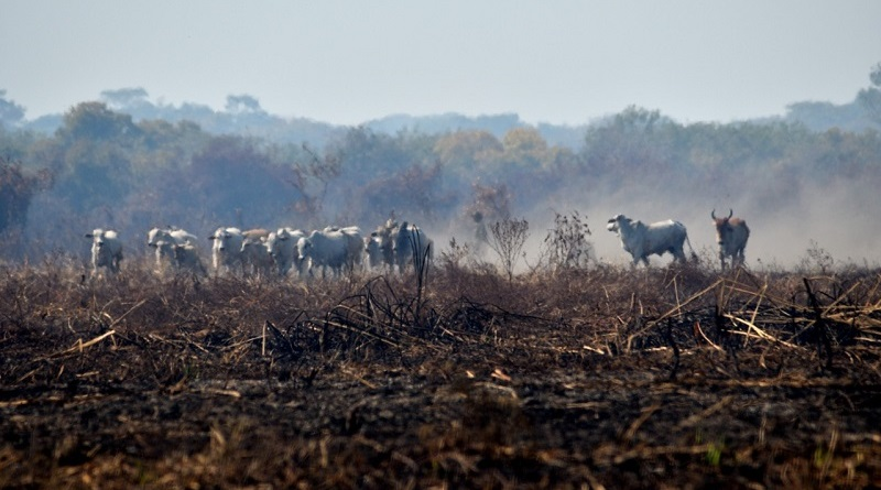 Milhares de britânicos assinam petição para boicotar carne da JBS, associada ao desmatamento na Amazônia
