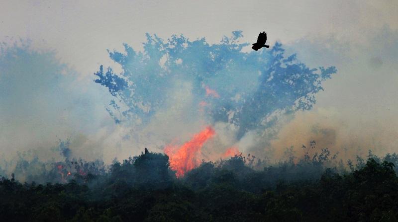 Pantanal tem aumento de mais de 200% nas queimadas em julho em comparação a 2019