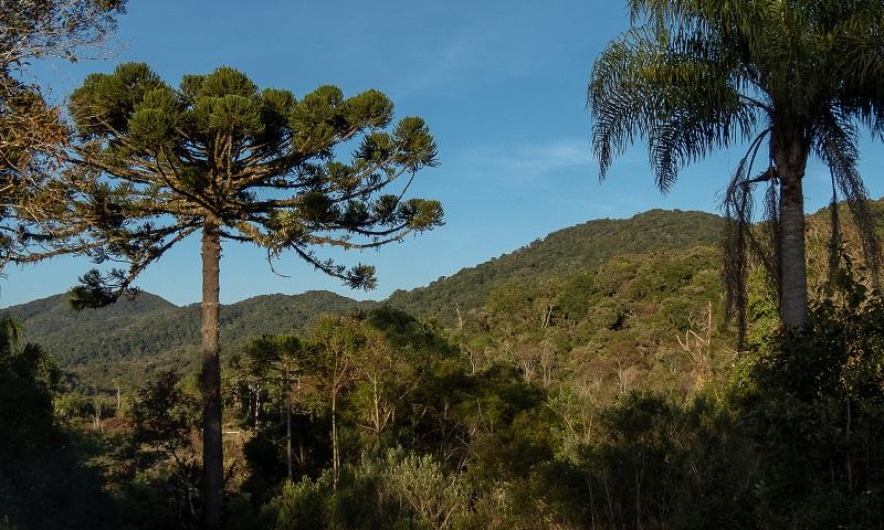 Parque Estadual das Lauráceas, maior Unidade de Conservação de Proteção Integral do Paraná, é vítima de crimes ambientais