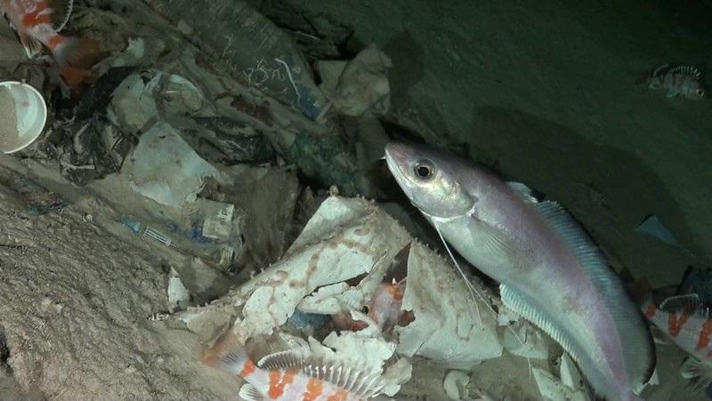 Quase 100% do plástico descartado no mar acaba no fundo dos oceanos