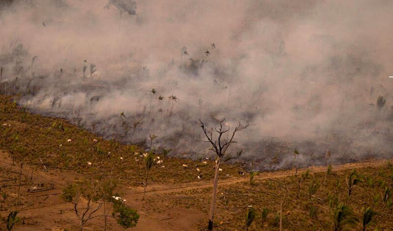 Queimadas aumentam na Amazônia, desrespeitando a moratória do fogo