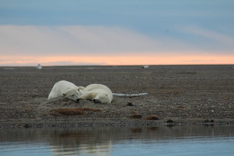 Trump finaliza planos para permitir exploração de petróleo e gás em reserva de vida selvagem no Alaska
