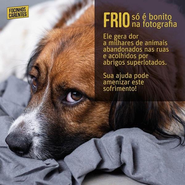 Campanha busca ajuda para alimentar e aquecer animais abandonados em Curitiba