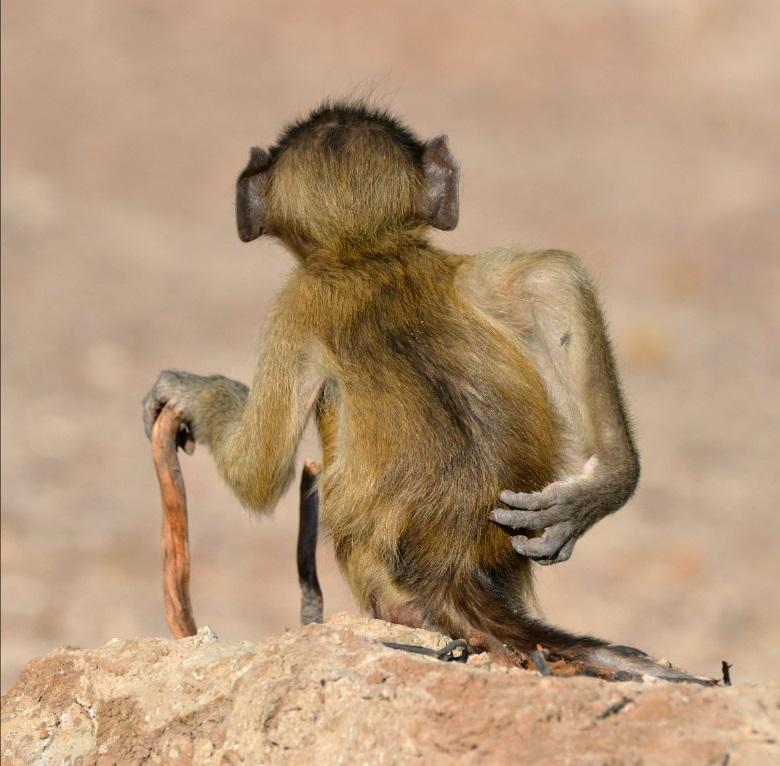 Comedy Wildlife Photography: flagrantes hilários nas imagens finalistas de 2020