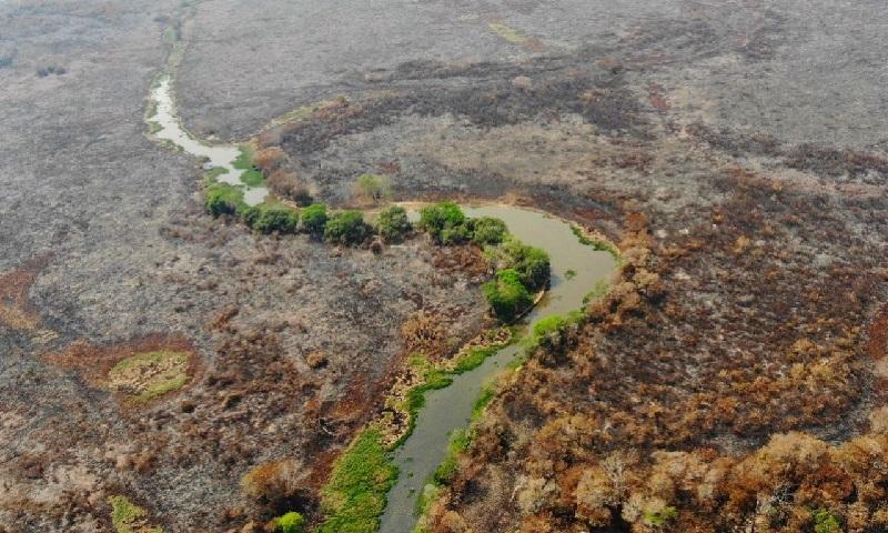 Pesquisadores analisam impacto dos incêndios e da crise climática sobre a água e os peixes do Pantanal