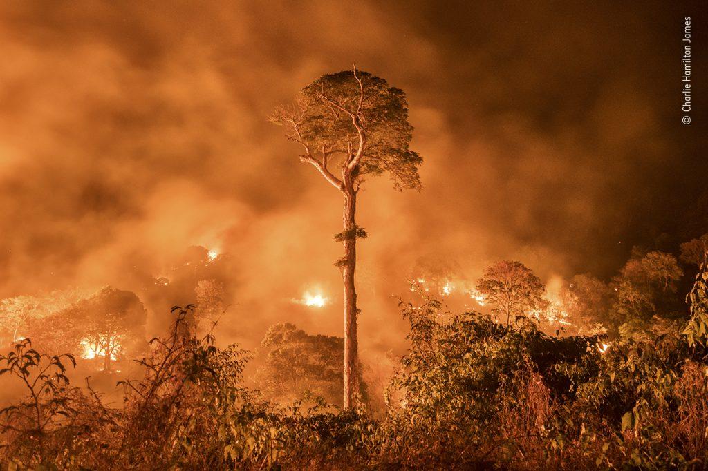 Wildlife Photographer of the Year divulga destaques da edição 2020, entre eles, flagrante dos incêndios na Amazônia
