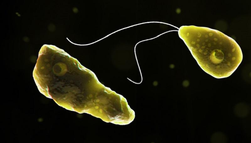 Moradores de cidades do Texa recebem alerta sobre contaminação da água com ameba letal