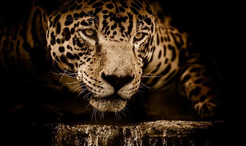 Brasil não assina compromisso global para reverter perda da biodiversidade