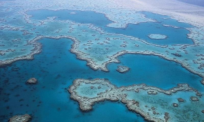 Após 120 anos, cientistas se deparam com descoberta surpreendente na Grande Barreira de Corais: um recife de 500 metros de altura