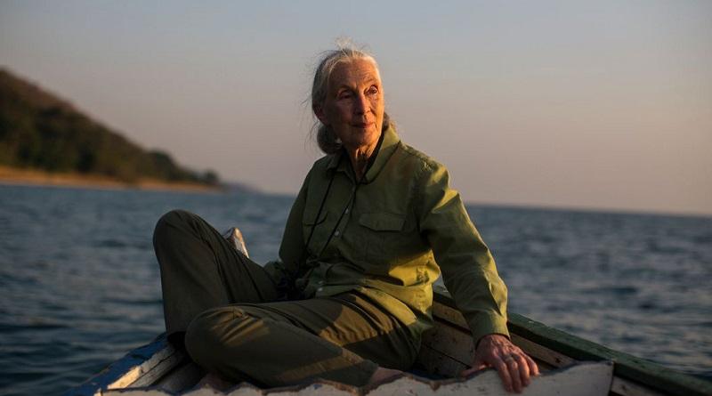 """""""A Covid-19 e a crise climática são terríveis manifestações da falta de compreensão e respeito pelo mundo natural"""", diz Jane Goodall"""