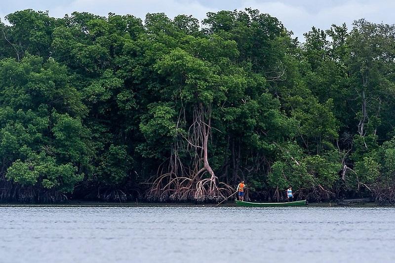 Berçários da vida marinha e protetores das regiões costeiras, os manguezais precisam da nossa proteção