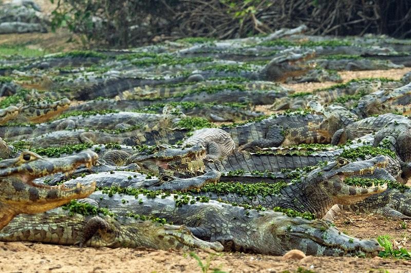 Pantanal: relato de uma breve viagem