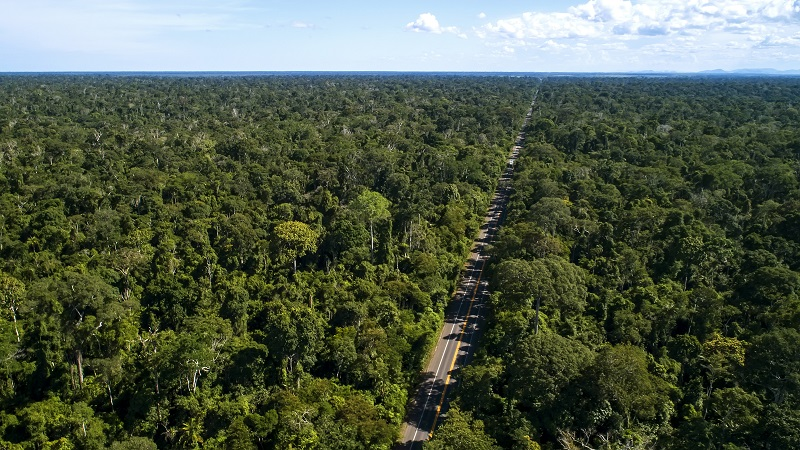 Possível ampliação de rodovia que corta Reserva de Sooretama ameaça ainda mais sobrevivência de espécies únicas que vivem ali