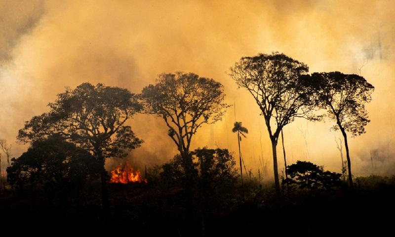 Sociedade civil entra com ação no Supremo Tribunal Federal pela retomada imediata de plano de combate ao desmatamento na Amazônia