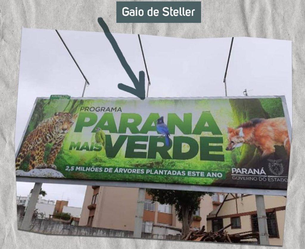 Paraná: a marca registrada de uma gestão sem compromisso com o meio ambiente