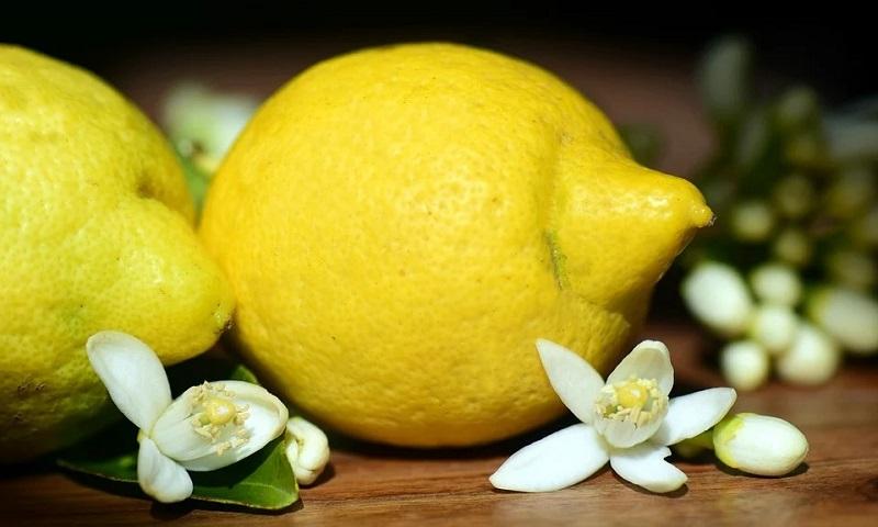 O finado limoeiro e a conserva de limão