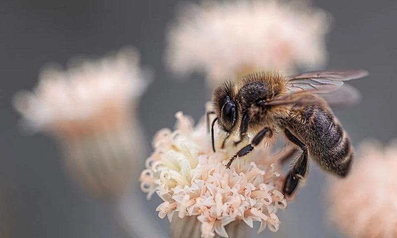 Cientistas criam o primeiro mapa com a distribuição global de espécies de abelhas