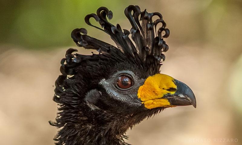 O Pantanal das águas, do fogo e das milhares de aves