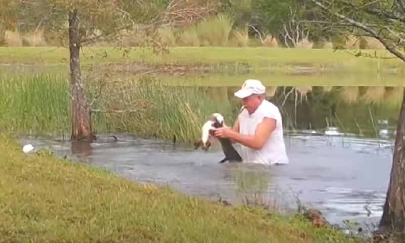 Sem pensar duas vezes, aposentado de 74 anos se joga em lagoa para salvar filhotinho de cão da boca de um jacaré
