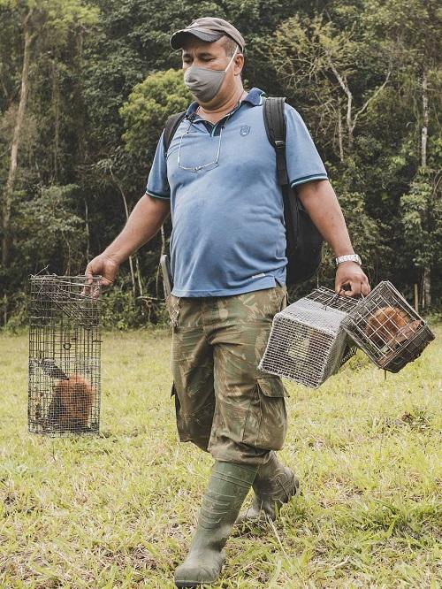 Em ação inédita no mundo, micos-leões-dourados são vacinados contra a febre amarela no Brasil